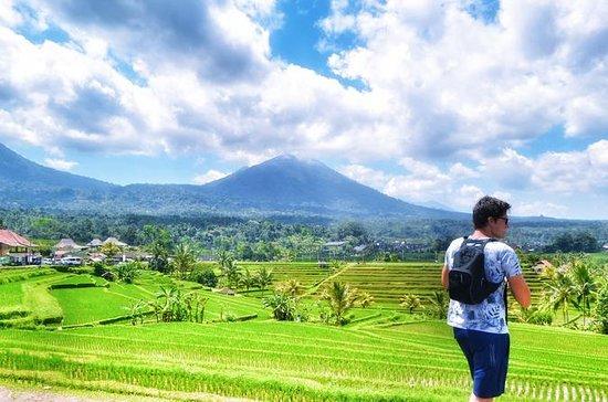 Descubra Bedugul Of Bali
