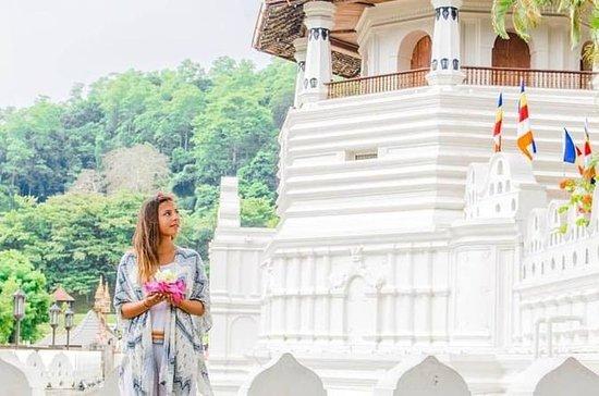 Kandy City Tour (1 dag)