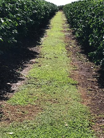Kauai Coffee Company 사진