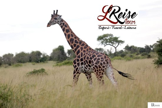 LiReise Tour Safari Experts