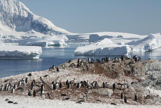 Ανταρκτική: Antarctica was the coolest, furthest and most remote place I've ever been. It feels like the edge of the world and a completely different planet.