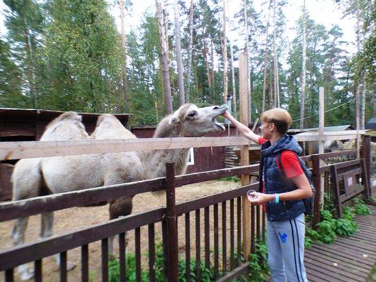 Zoo Studio Kovcheg: Я, как всегда, с верблюдом ;)