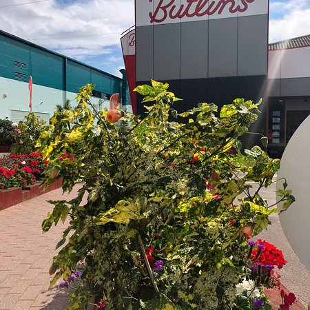 Butlin's Minehead Resort: photo2.jpg
