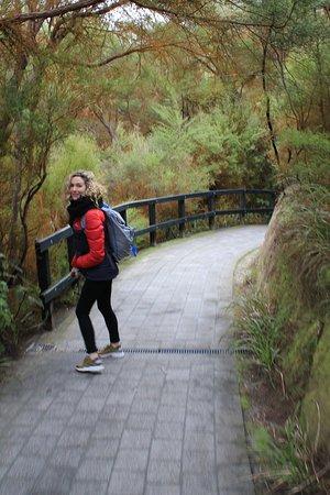Hobbiton & Rotorua Including Te Puia - Small Group Tour from Auckland: Rotorua