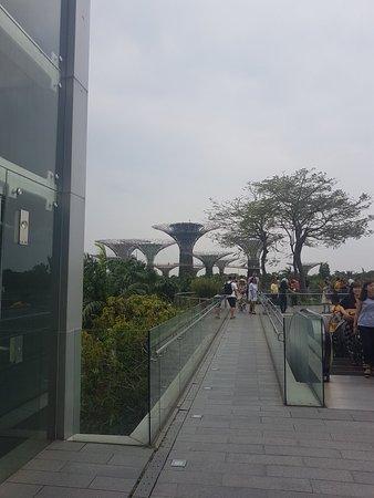 Marina Bay Sands Skypark: 20180916_080224_large.jpg