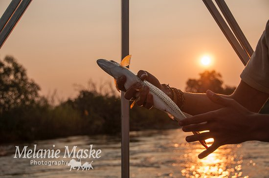 Divundu, ناميبيا: Fishing