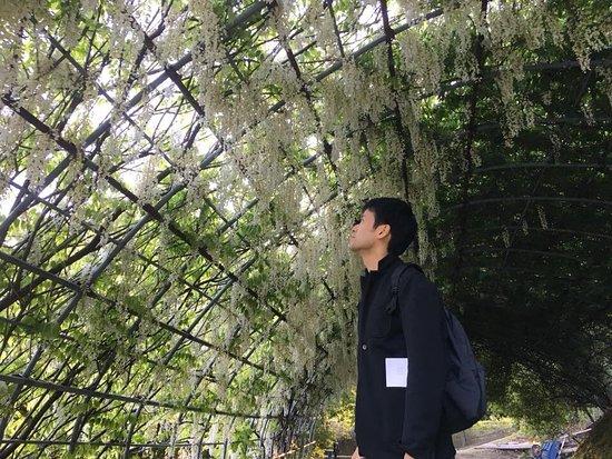 Сад цветов Кавати Фудзи вгороде Китакюсю: photo4.jpg