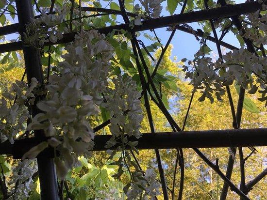 Сад цветов Кавати Фудзи вгороде Китакюсю: photo5.jpg