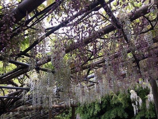 Сад цветов Кавати Фудзи вгороде Китакюсю: photo7.jpg