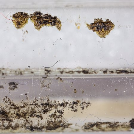 Islip, NY: Photos of mold on the bags of artwork. This is not dirt despite the gallery owner's response. Th