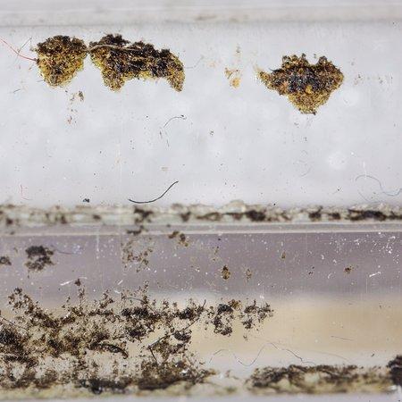 ไอสลิป, นิวยอร์ก: Photos of mold on the bags of artwork. This is not dirt despite the gallery owner's response. Th