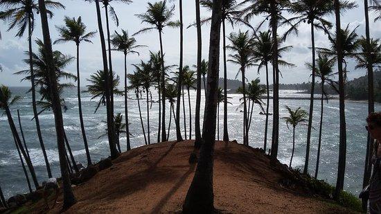 Mirissa Beach : Coconut trees hills in Mirissa