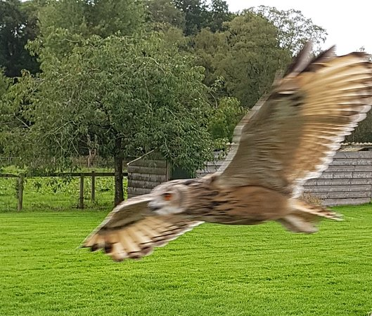 The Lake District Wildlife Park: 20180915_121844_large.jpg