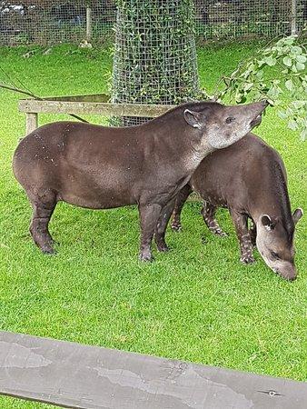The Lake District Wildlife Park: 20180915_113928_large.jpg