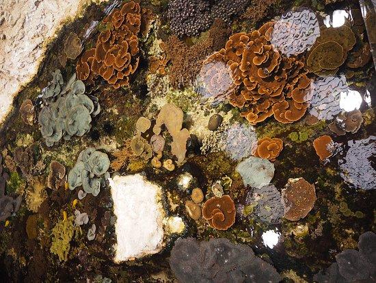 Nausicaa: Coral reef lagoon