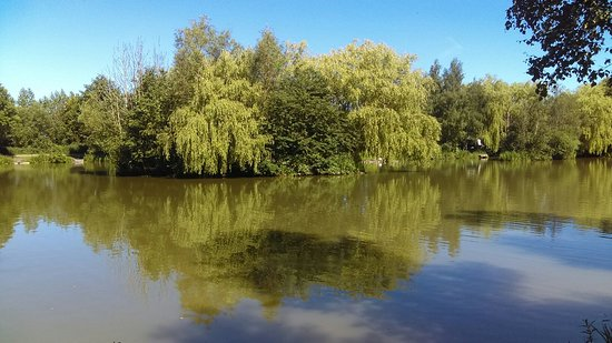 Bulkington, UK: Beautiful scenery at Parker's fishery/willow tree Cafe x