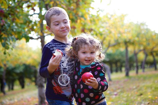 Hiram, ME: Apple Acres is very family friendly! Teach your kids about organic fruit, while having fun!
