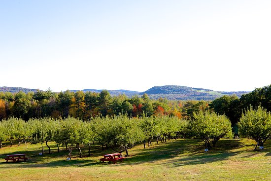 Hiram, ME: The view of the valley in our main pick-your-own orchard