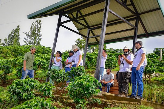 Province of Alajuela, Costa Rica: Visit our coffee fields