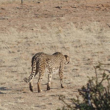 Solitaire, Namibia: IMG_20180918_215005_293_large.jpg