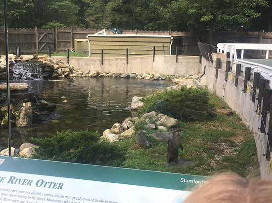 Stamford Museum & Nature Center: Otters!