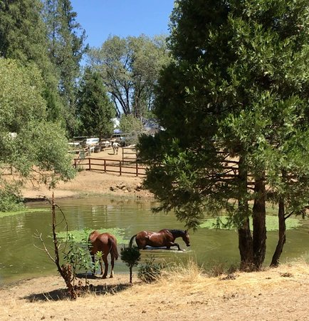 Nevada City, CA: The ranch is set amongst the trees on a beautiful 40 acres