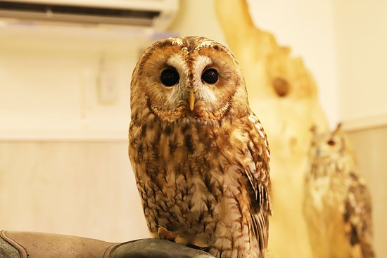 Sunset Owl Cafe