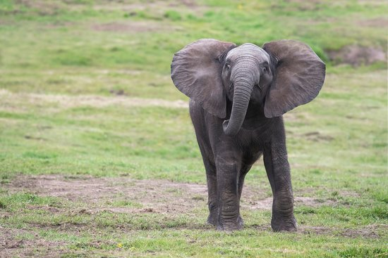 Bewdley, UK: Elephant at West Midland Safari Park