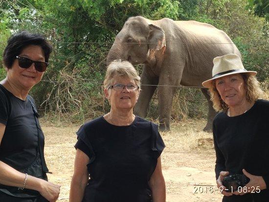 Tours at Srilanka