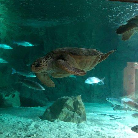 Aquarium de Biarritz: photo2.jpg