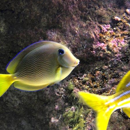 Aquarium de Biarritz: photo4.jpg