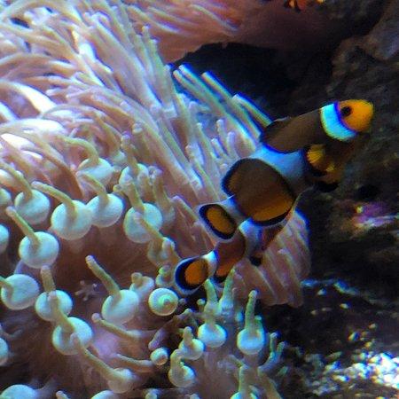 Aquarium de Biarritz: photo5.jpg