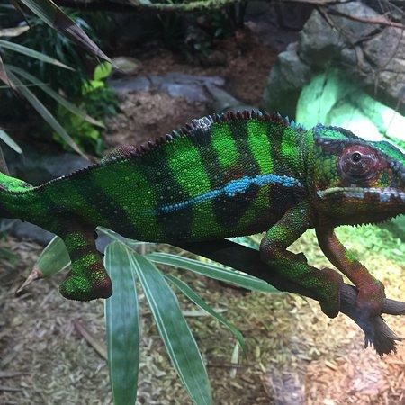 Singapore Zoo: photo2.jpg