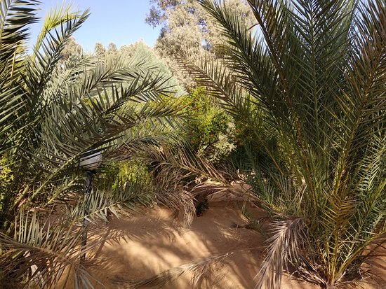 Tataouine, Tunisia: IMG_20180906_184815_large.jpg