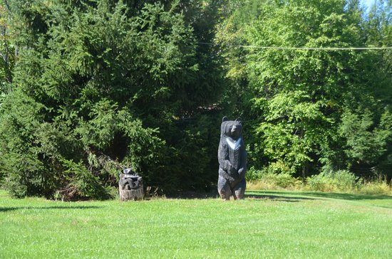 White Pine, MI: The only bear we saw