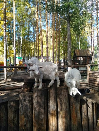 Novoabzakovo, Rusia: IMG_20180915_105952_large.jpg