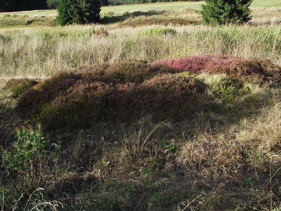 Bozi Dar, Republika Czeska: příroda kolem Ježíškovy cesty u Božího daru