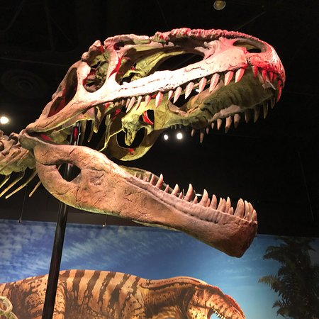 Perot Museum of Nature and Science: photo0.jpg