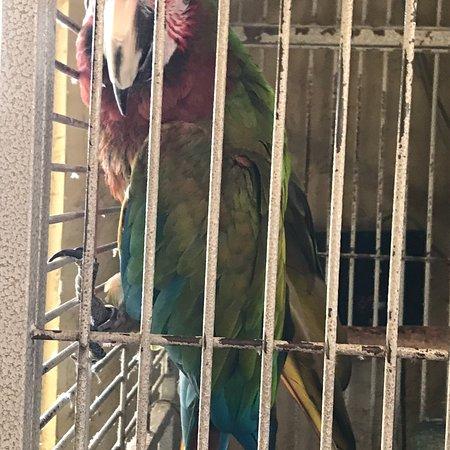The Lazy Parrot: photo2.jpg