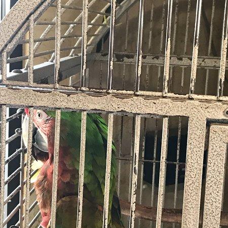 The Lazy Parrot: photo3.jpg