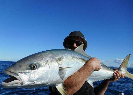 Russell, Νέα Ζηλανδία: Kingfish. May 2017