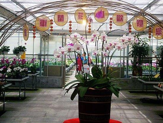 台灣礁溪: 金車蘭花園