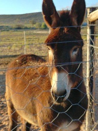 Springbok Photo