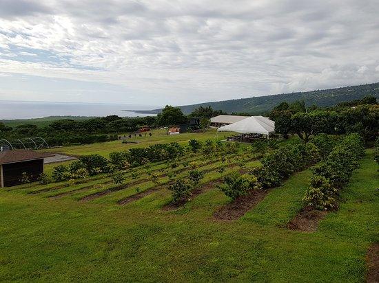 Honaunau, Hawái: 20180918_154405_large.jpg