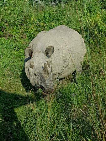 Royal Chitwan Ulusal Parkı, Nepal: IMG-20180920-WA0026_large.jpg