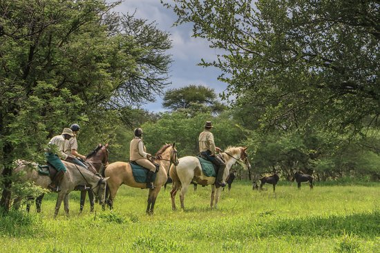 Bulawayo, Zimbabue: Cawston Wildlife Estate - Excellent Plains Game viewing on horseback