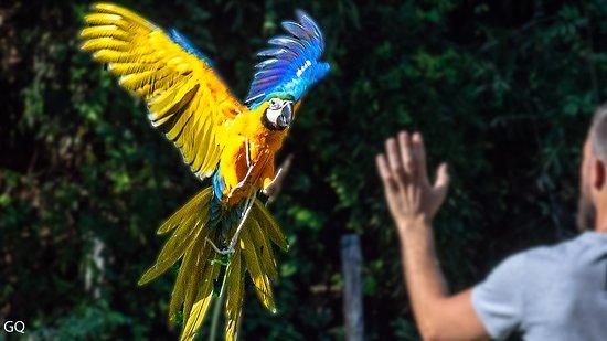 Sant'Alessio con Vialone, Ý: pappagallo