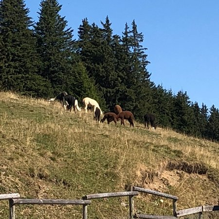Val-d'Illiez, Swiss: photo7.jpg