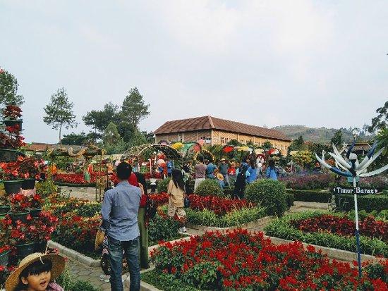 Img 20180915 163018 2 Large Jpg Picture Of Begonia Garden