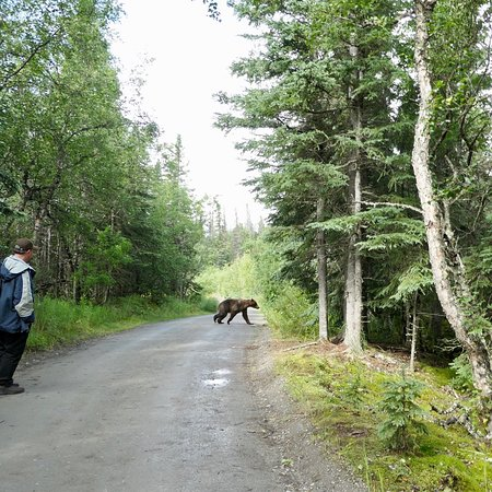 The best of Alaska , an amazing experience.